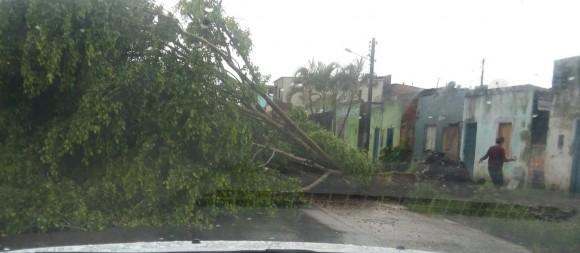 Queda de árvore provocou grande congestionamento na rodovia.