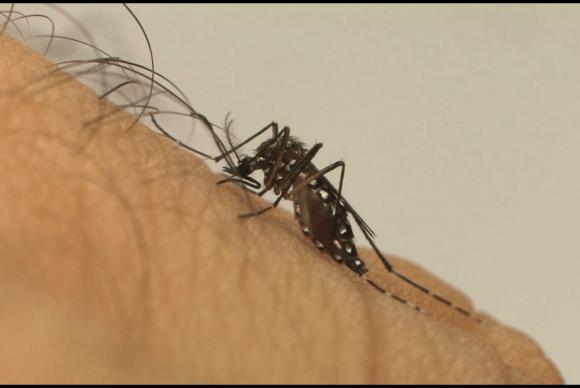 Militares vão atuar no combate ao Aedes aegypti (Foto Fiocruz).