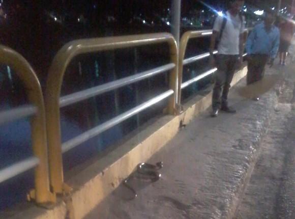 Cobra virou atração na Ponte do Marabá, ontem à noite (Foto Domingos Fontes).