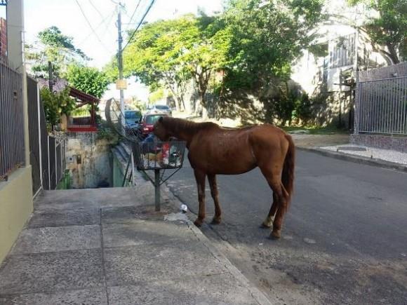 Cavalo toma café da manhã na Rua Pedro Zildo Guimarães, bairro Zildolândia