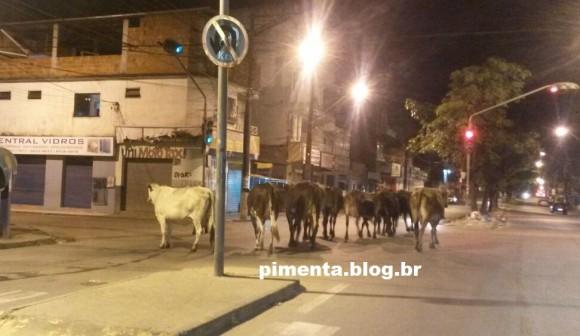 Animais fecham cruzamento da Princesa Isabel com o Pati, no São Caetano.